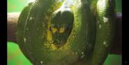 Columbus Zoo Green Python