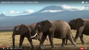 Like Elephants Live in Groups