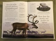 Polar Animals (Over 100 Questions and Answers to Things You Want to Know) (2)
