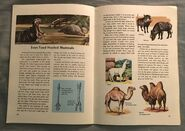 A Golden Exploring Earth Book of Animals (19)