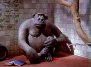 Creature Comforts Gorilla