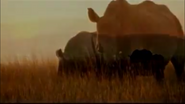 Elephant Tales Rhino
