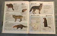 Macmillan Animal Encyclopedia for Children (5)
