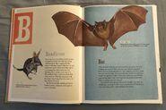 The Dictionary of Ordinary Extraordinary Animals (4)