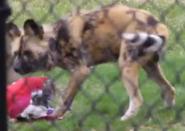 Toledo Zoo Dog