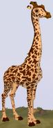Masai Giraffe WOZ