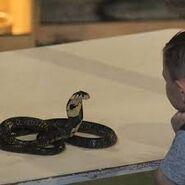 Noah's Ark Coral Snakes Cobras Rattlesnakes Frilled Lizards