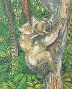 Riversleigh rainforest koala