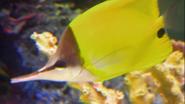 Tanked! Long-Beaked Butterflyfish