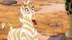 The-golden-zebra (479)