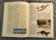 The Kingfisher Illustrated Encyclopedia of Animals (98)