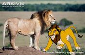 J'Bula and Real Lion