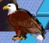 Bald eagle reader rabbit 1st grade