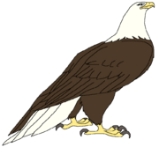 Jewel the Eagle