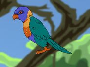 Rileys Adventures Rainbow Lorikeet