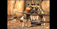 Brookfield Zoo Dogs