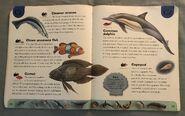 Ocean Life Dictionary (4)