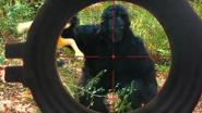 SML Gorilla