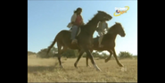 Scout's Safari Horses