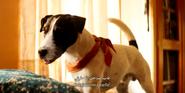 Little Miss Dolittle Dog