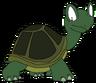 Sheldon the Box Turtle