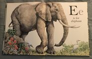 The A to Z Book of Wild Animals (5)