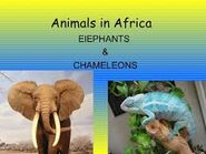 The Elephants and Chameleons