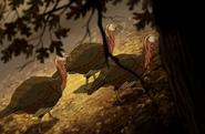OTGW Wild Turkeys