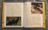 Scholastic Encyclopedia Of Animals (57)