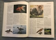 The Kingfisher Illustrated Encyclopedia of Animals (63)
