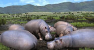 Afrika-hippos-screenshot-releases-in-america-2009