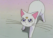 Artemis Angry