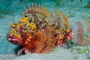 Barbfish-45M1066-12