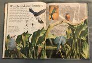Birds (Eye Wonder) (7)