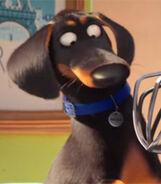 Buddy-the-secret-life-of-pets-1.74