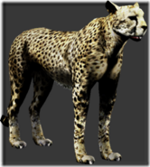 Cheetah thumb