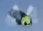 Dd-1941-09-12-fly