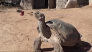 El Paso Zoo Tortoise