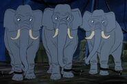 Elephants BITBT