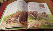 I Wonder Why Squirrels Have Bushy Tails