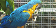 Indianapolis Zoo Blue and Yellow Macaw