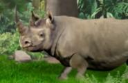 Little Einsteins Rhino