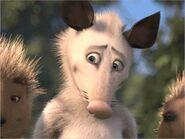 Ozzie the Opossum