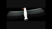 Safari Island Albatross