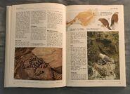The Kingfisher Illustrated Encyclopedia of Animals (82)