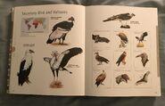 Visual Dictionary of Animals (71)