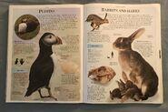DK Encyclopedia Of Animals (133)