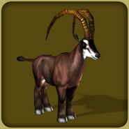 Giant Sable Antelope (Blue Fang)