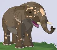 Indian Elephant WOZ