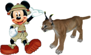 Mickey meets African Caracal